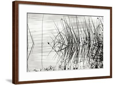 Reeds 2-Lee Peterson-Framed Photographic Print