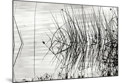 Reeds 2-Lee Peterson-Mounted Photographic Print
