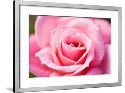 Pink Rose V-Beth Wold-Framed Photographic Print