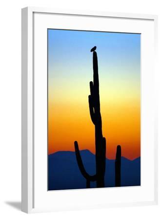Owl at Sunset-Douglas Taylor-Framed Photographic Print