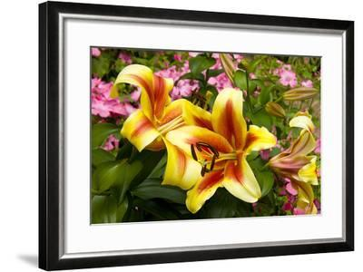Yellow Lilies-George Johnson-Framed Photographic Print