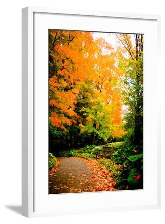 Autumn Pathway III-Beth Wold-Framed Photographic Print
