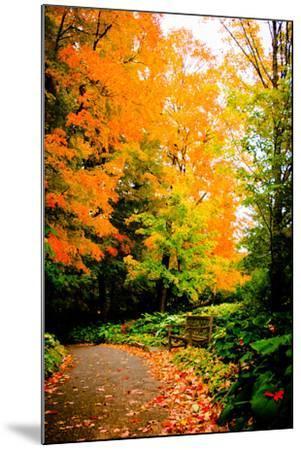 Autumn Pathway III-Beth Wold-Mounted Photographic Print