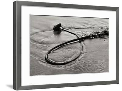Seaweed-Lee Peterson-Framed Photographic Print