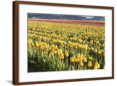 Yellow and Orange Tulips II-Dana Styber-Framed Photographic Print