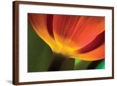 Tulip Up Close II-Lee Peterson-Framed Photographic Print