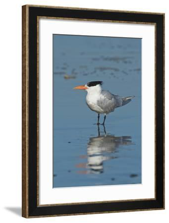 Bird 3-Lee Peterson-Framed Photographic Print