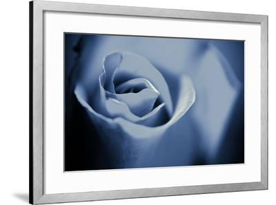 Blue Rose II-Beth Wold-Framed Photographic Print