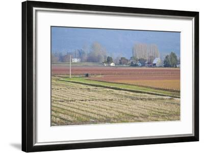 Red and Gold Fields II-Dana Styber-Framed Photographic Print