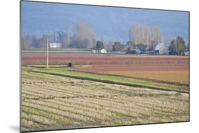 Red and Gold Fields II-Dana Styber-Mounted Photographic Print