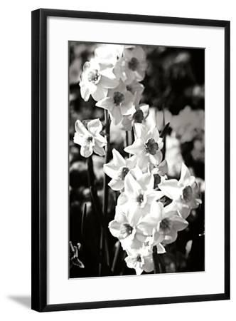 Daffodils II-Alan Hausenflock-Framed Photographic Print
