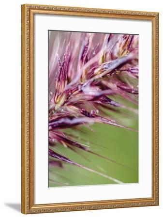 Purple Grasses II-Beth Wold-Framed Photographic Print