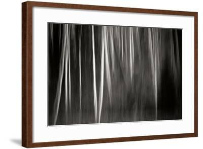 Abstract Trees-Beth Wold-Framed Photographic Print
