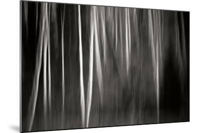 Abstract Trees-Beth Wold-Mounted Photographic Print