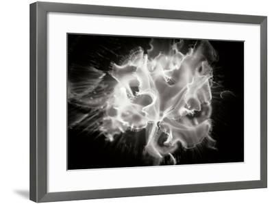 Jellyfish-Beth Wold-Framed Photographic Print