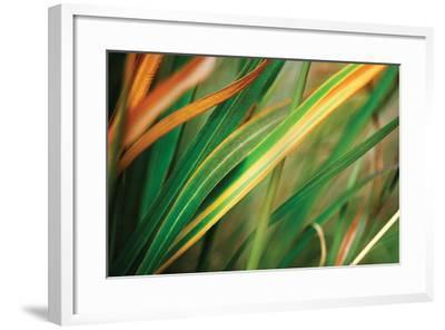 Grass in Fall I-Bob Stefko-Framed Photographic Print