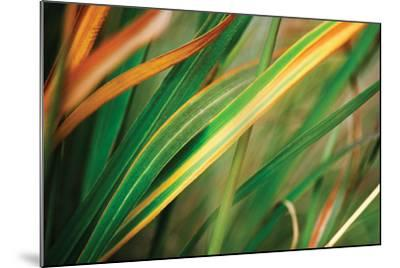 Grass in Fall I-Bob Stefko-Mounted Photographic Print
