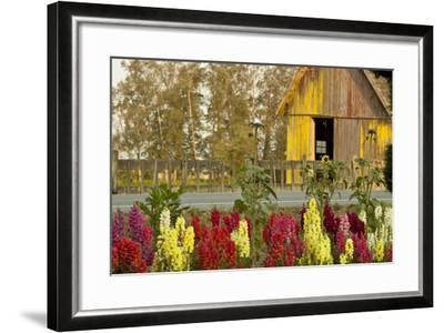 Snapdragons Barn II-Dana Styber-Framed Photographic Print
