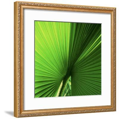 Palm Frond I-Bob Stefko-Framed Photographic Print