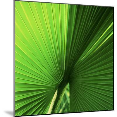 Palm Frond I-Bob Stefko-Mounted Photographic Print
