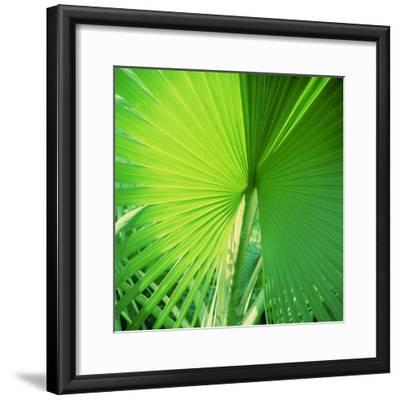 Palm Frond II-Bob Stefko-Framed Photographic Print