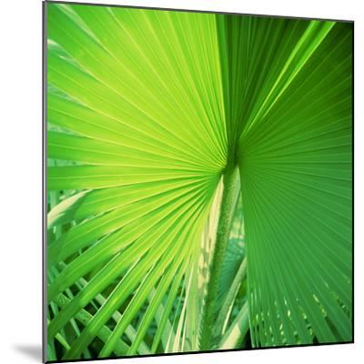 Palm Frond II-Bob Stefko-Mounted Photographic Print