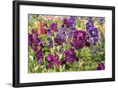 Purple Garden II-Maureen Love-Framed Photographic Print
