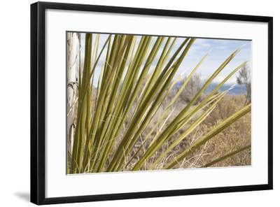 Century Plant II-Dana Styber-Framed Photographic Print