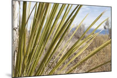 Century Plant II-Dana Styber-Mounted Photographic Print