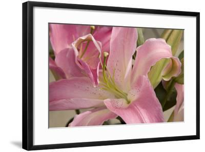 Soft Pink Lily I-Maureen Love-Framed Photographic Print
