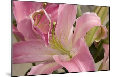 Soft Pink Lily I-Maureen Love-Mounted Photographic Print