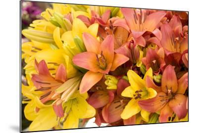 Sunny Lily I-Maureen Love-Mounted Photographic Print