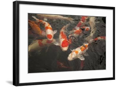 Koi I-Karyn Millet-Framed Photographic Print