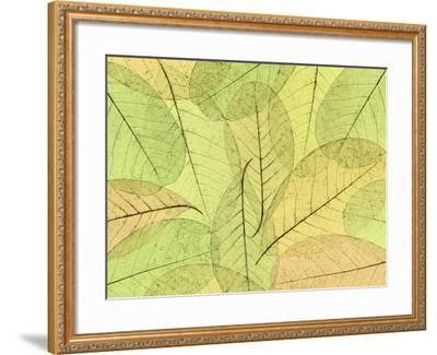 Leaf Collage I-Kathy Mahan-Framed Photographic Print