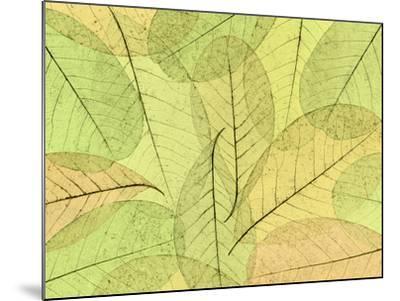 Leaf Collage I-Kathy Mahan-Mounted Photographic Print