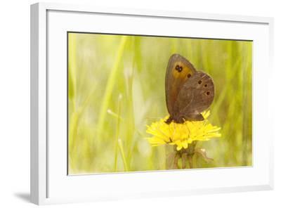 Weeds Make Nectar-Roberta Murray-Framed Photographic Print