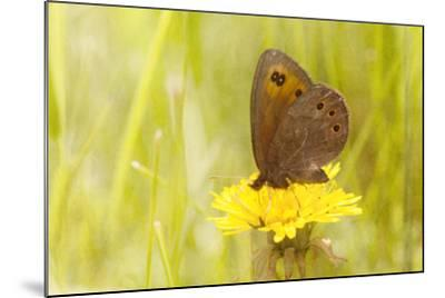 Weeds Make Nectar-Roberta Murray-Mounted Photographic Print