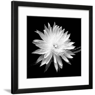 Queen of the Night BW II-Douglas Taylor-Framed Photographic Print