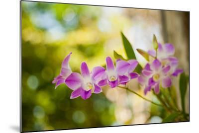 Thai Orchids-Erin Berzel-Mounted Photographic Print