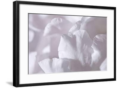 Rosy Petals II-Rita Crane-Framed Photographic Print