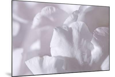 Rosy Petals II-Rita Crane-Mounted Photographic Print