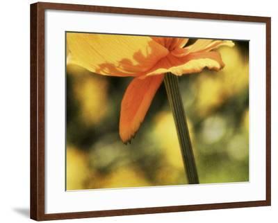 See Through-Roberta Murray-Framed Photographic Print