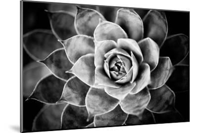 Monochrome Succulent V-Erin Berzel-Mounted Photographic Print