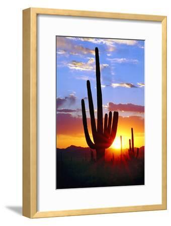 Saguaro Sunset-Douglas Taylor-Framed Photographic Print