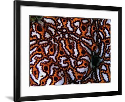 Colonial Sea Squirt-Andrea Ferrari-Framed Photographic Print