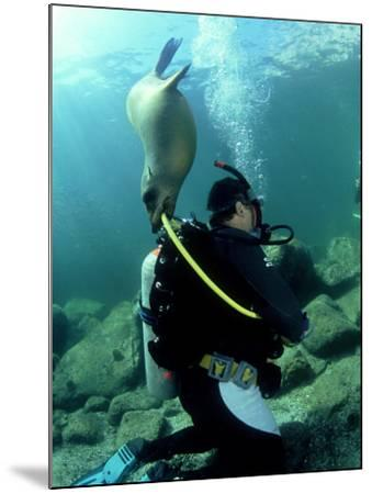 Diver with Californian Sea Lion, Mexico-Tobias Bernhard-Mounted Photographic Print
