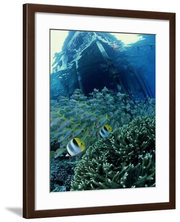 Reef Panorama Under Pier, French Polynesia-Tobias Bernhard-Framed Photographic Print