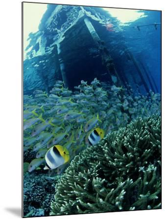 Reef Panorama Under Pier, French Polynesia-Tobias Bernhard-Mounted Photographic Print
