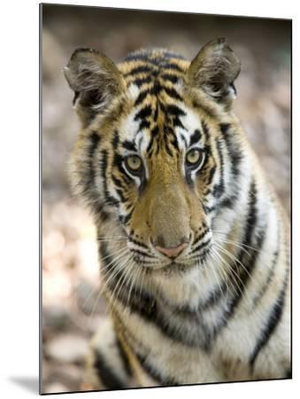 Bengal Tiger, Close-up Portrait of Female Tiger, Madhya Pradesh, India-Elliot Neep-Mounted Photographic Print