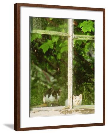 Grapevine-Georgia Glynn-smith-Framed Photographic Print